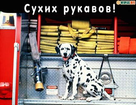 День пожарной охраны поздравление медведева