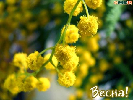 Открытки :: Начало весны :: Поздравление с началом весны Отправить открытку.