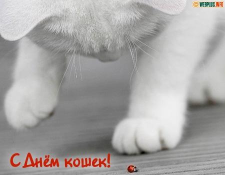 1 марта - День Кошек C_2288_wdc01c