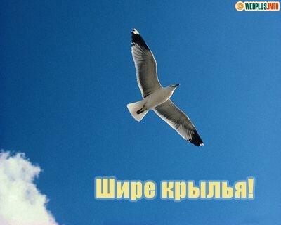Шире крылья!