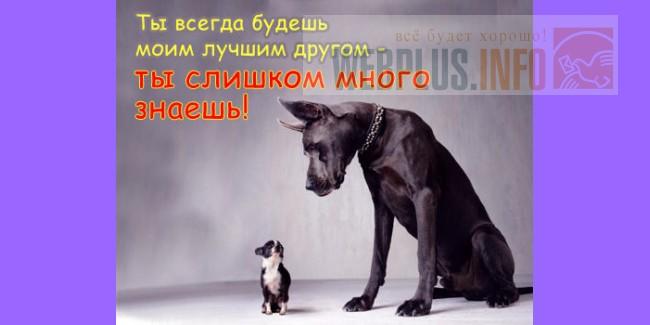 Расписание поездов Санкт Петербург новороссийск 228