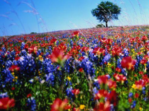 Полевые цветы на фоне неба.