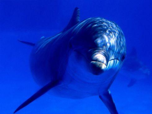 Фон рабочего стола где видно Red Sea, underwater world, fish ...   367x490