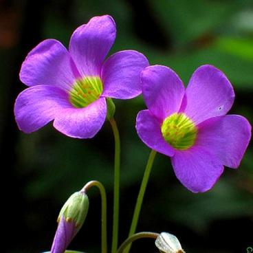Обои для рабочего стола цветы фиолетовые 5