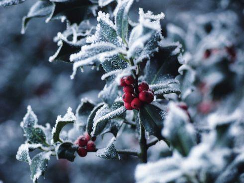 обои на рабочий стол скачать бесплатно зима природа новый год