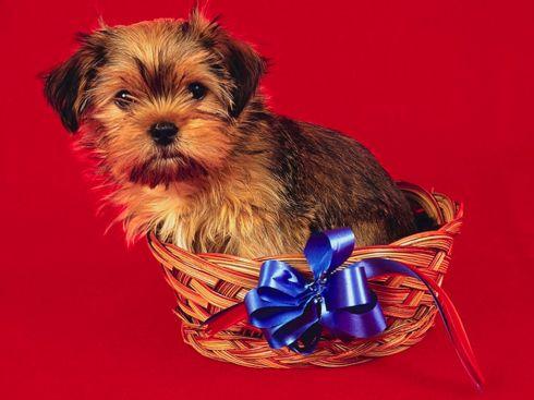 Подарок для собаководов 76