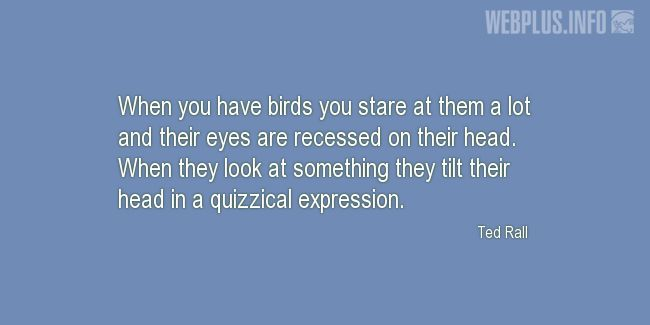 Quotes and pictures for Bird Day. «Quizzical expression» quotation with photo.
