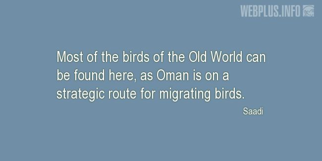 Quotes and pictures for Migrating birds. «A strategic route» quotation with photo.