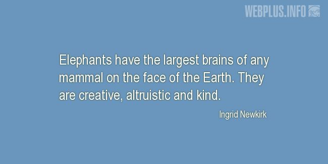 Quotes and pictures for Brains. «The largest brains» quotation with photo.