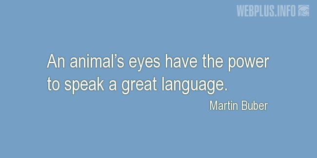 Quotes and pictures for Homeless animals, Adopting animals. «An animal's eyes» quotation with photo.