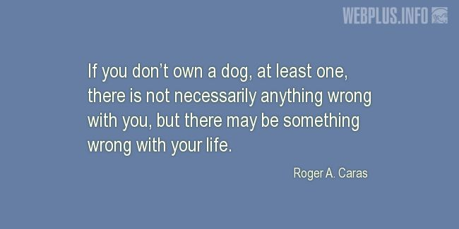 Quotes and pictures for Homeless animals, Adopting animals. «If you don't own a dog» quotation with photo.