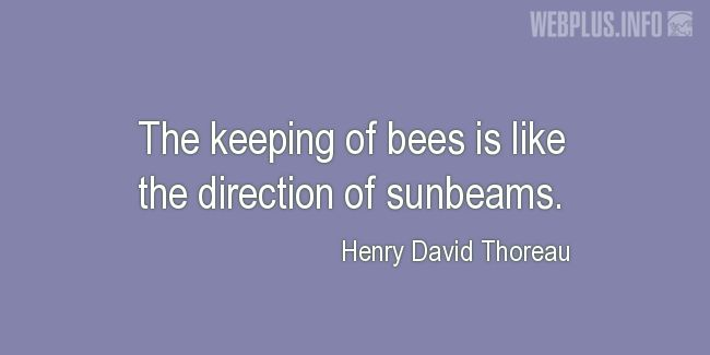 Quotes and pictures for Honey. «The keeping of bees» quotation with photo.