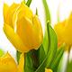 Открытка - Желаю красивой весны