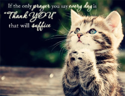 eCard - The only prayer Thank you