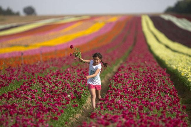 Цветочные плантации