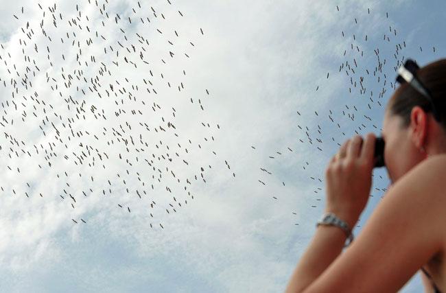 Миграция перелетных птиц