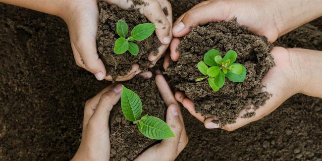 22 ноября - День посадки деревьев на Британских Виргинских островах.  Календарь :: Праздники и события
