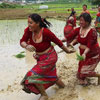 National Rice Day in Nepal