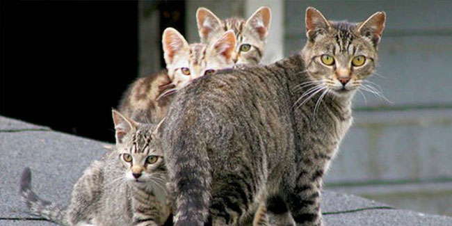 16 October - Feral Cat Day