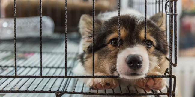 3 May - Puppy Mill Action Week in US