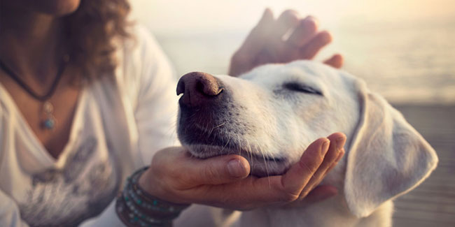 30 August - National Holistic Pet Day in USA
