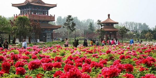 15 March - China Flower Festival