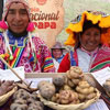 National Potato Day in Peru