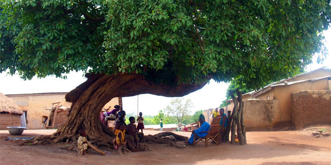 1 June - National Tree Day in Benin