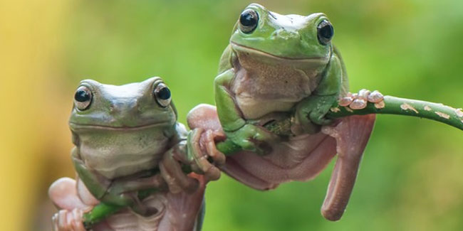 20 March - World Frog Day