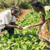 Zambia Farmers' Day