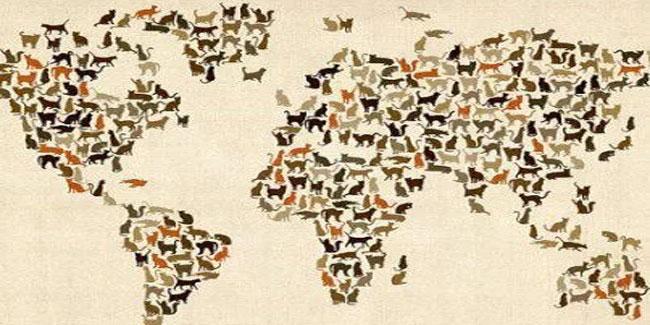 Всемирный День кошки
