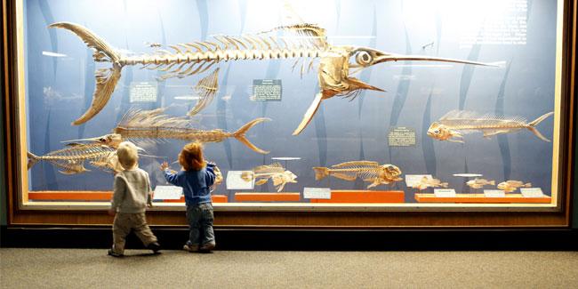 Международный день музеев появился в календаре в 1977 году