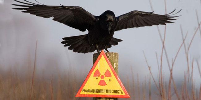 День участников ликвидации последствий радиационных аварий и катастроф