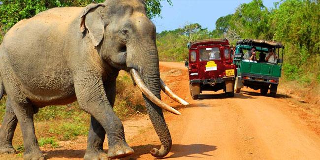 День Независимости Шри-Ланки