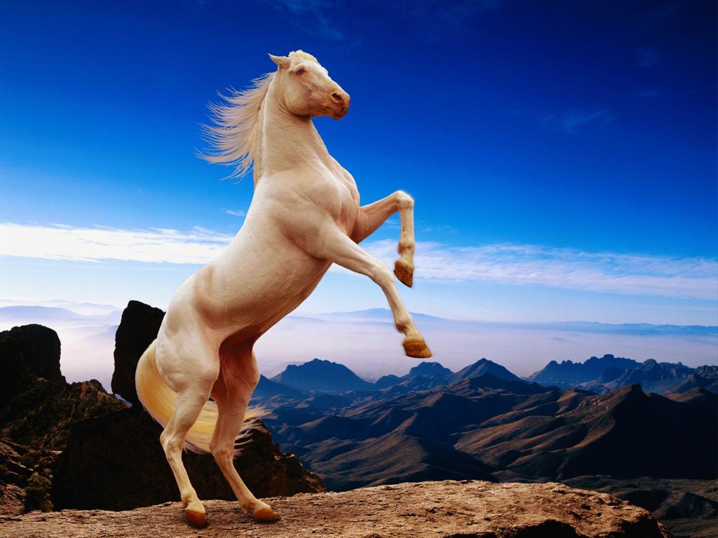 преданию, лошади в дыбах картинки если