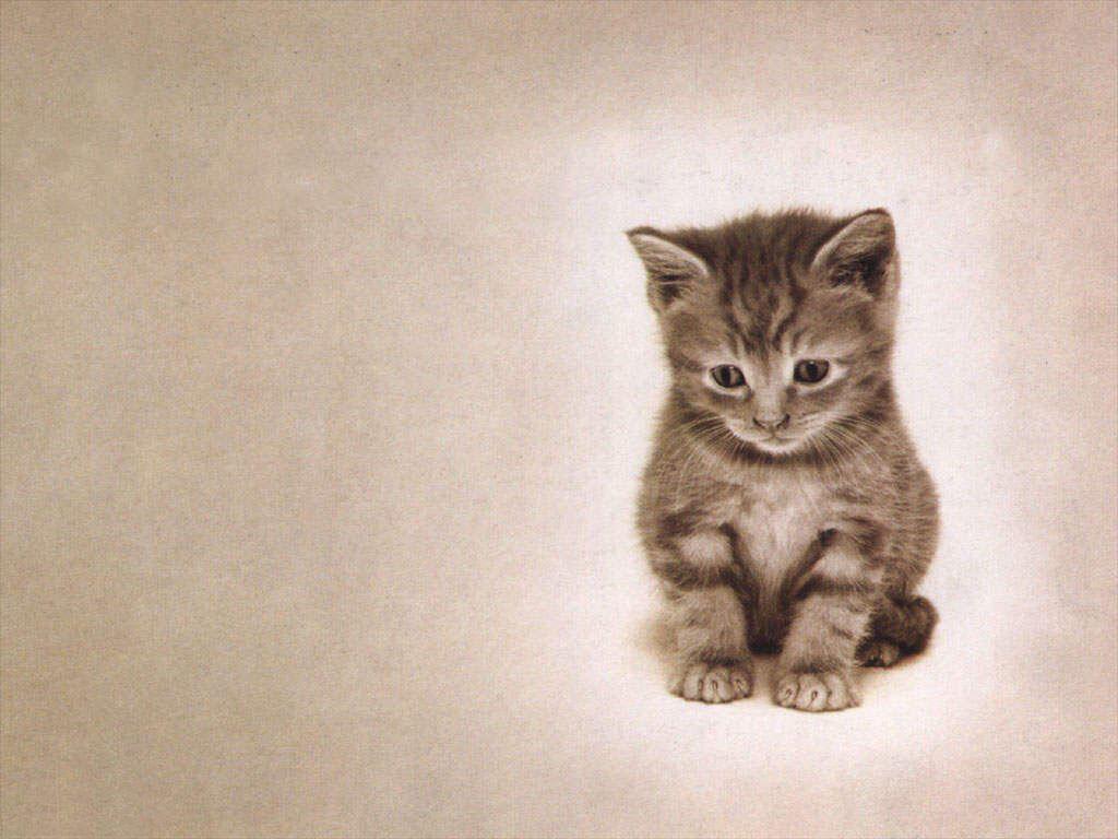 2017 год, открытки прости котенок