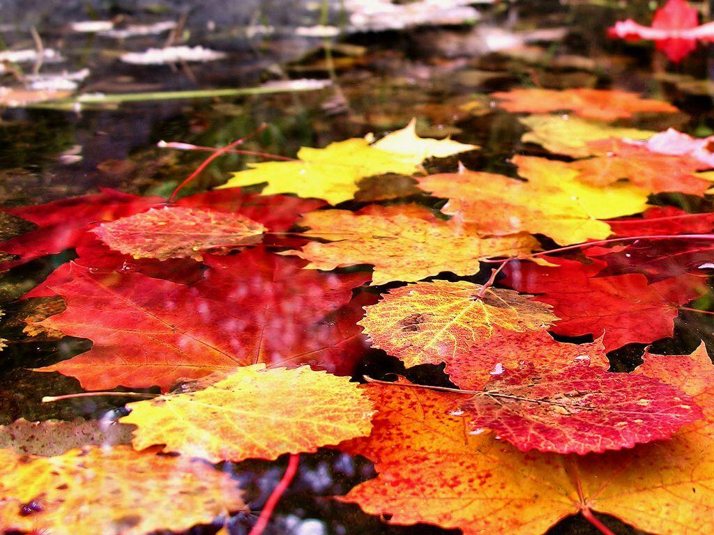 обои на рабочий стол осень листья дождь 15951