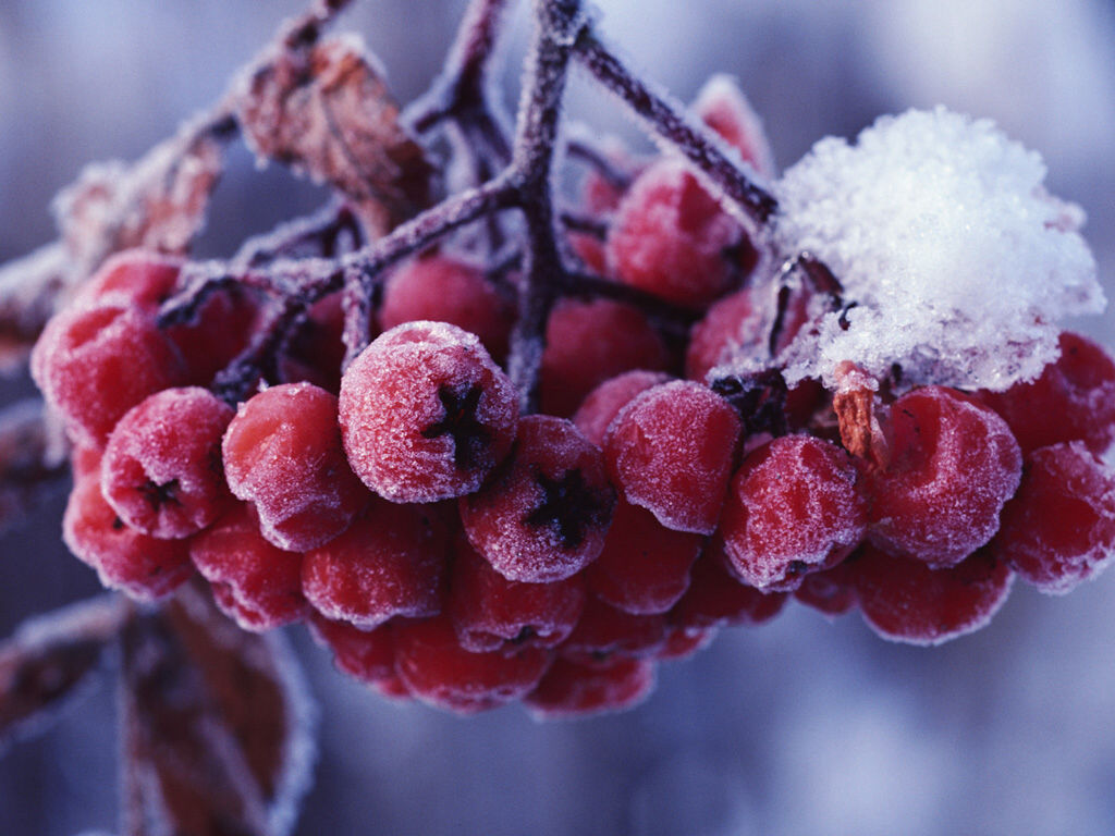 Картинки зимняя природа рабочего стола