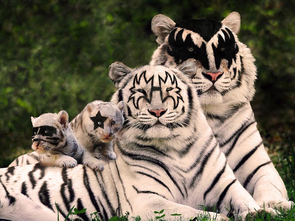 Подруге картинки, смешные картинки с тигром и надписями