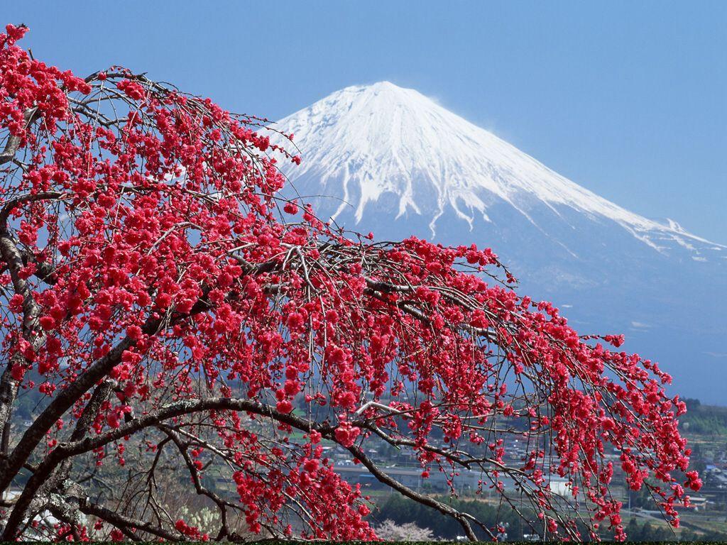 Великого поста, японская сакура картинки