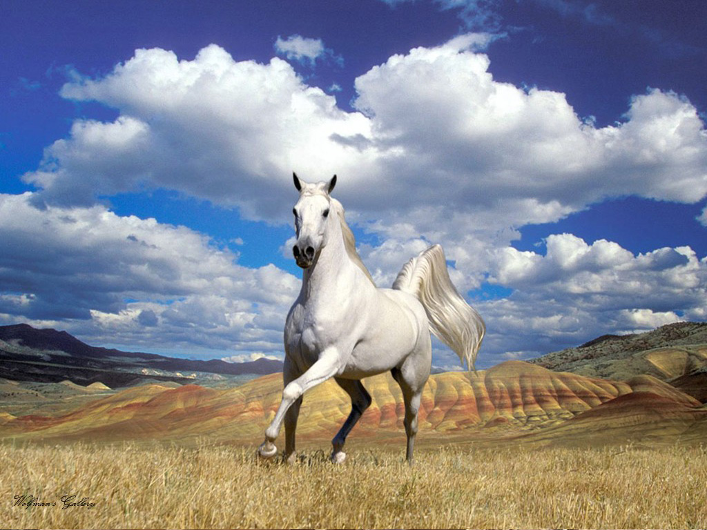 Обои лошади, кони, пастбище на рабочий стол 69665 | 768x1024